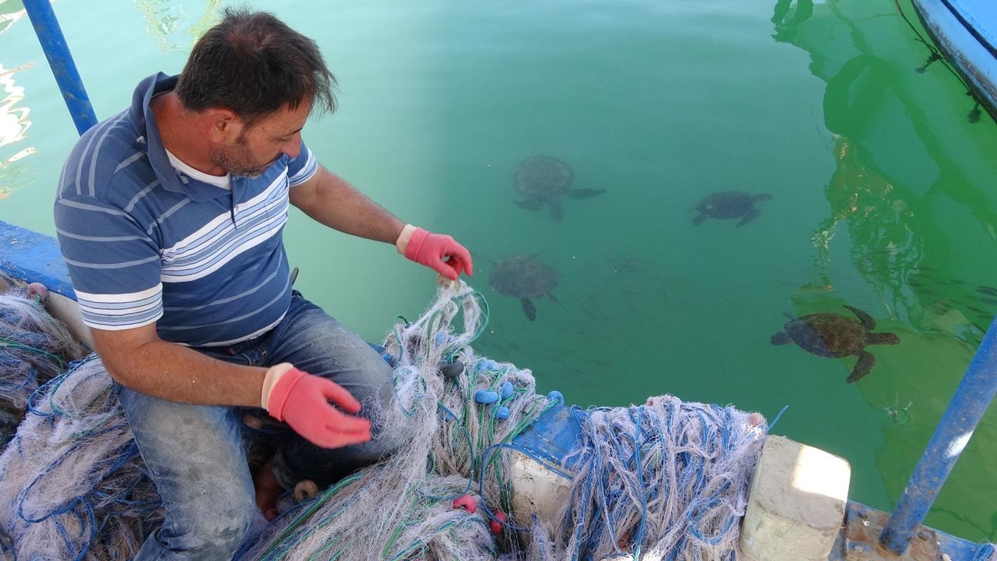 Mersinli Balıkçılar, Carettaları elleriyle besliyor