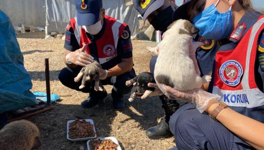 Jandarma, sokak hayvanlarına mama ve su verdi