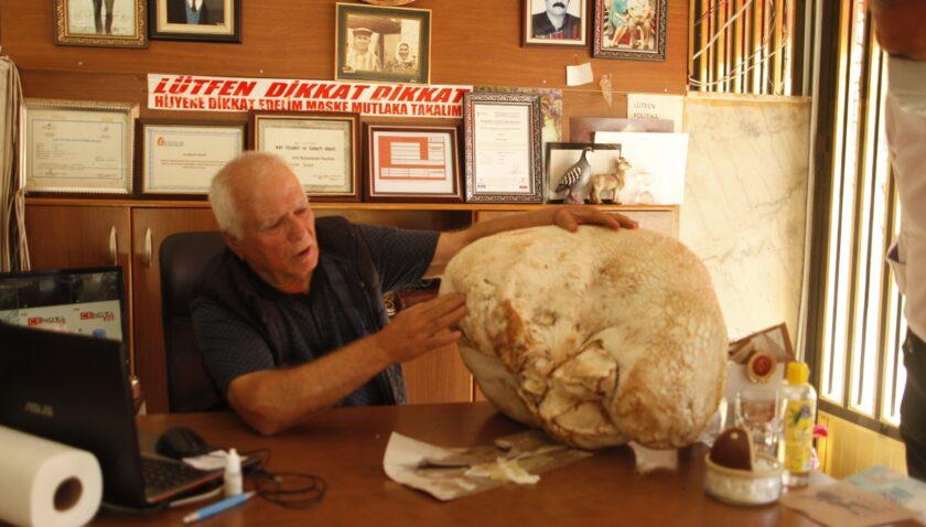 Mersin'de 23 kiloluk dev mantar bulundu