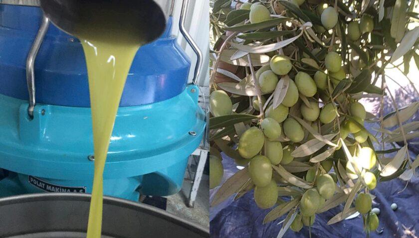 Zeytinyağı 22 lirayken bu yıl 35 liraya yükseldi